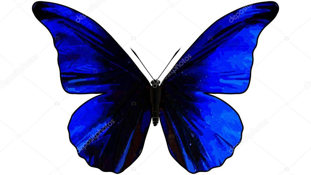 Blue butterfly in flight