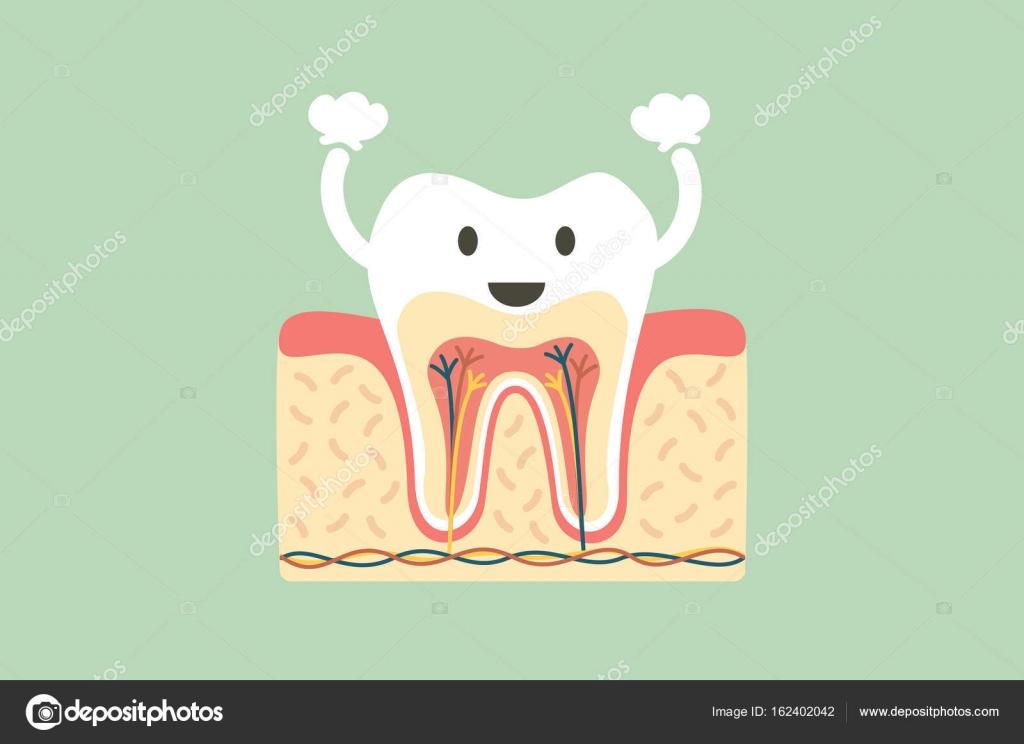 Anatomía dental sana es divertido — Archivo Imágenes Vectoriales ...