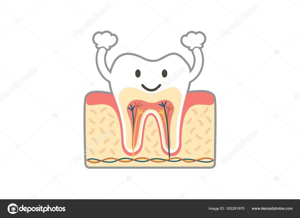 Anatomía dental sana es divertido aislado en blanco — Vector de ...