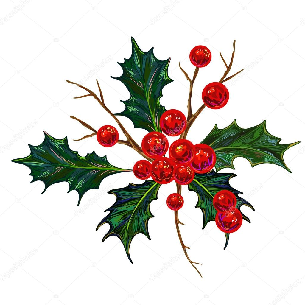 holly berry vector illustration botanical drawing