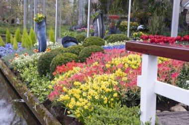 """Картина, постер, плакат, фотообои """"цветные тюльпаны в саду, весенние цветы"""", артикул 341929132"""