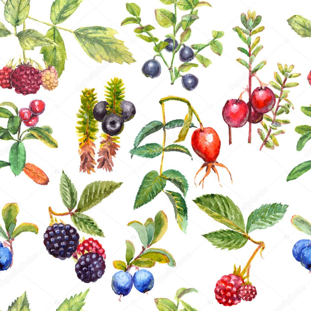 Seamless pattern of watercolor wild forest berries: crowberry, rose hips, blackberry, raspberry, cranberry, blueberry, bilberry. Isolated on white background.