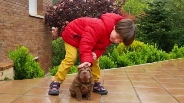 Dítě pohladí jeho Shar Pei štěně. Cute shar pei pes se svým majitelem. Vrásčitá malý roztomilý pes štěně