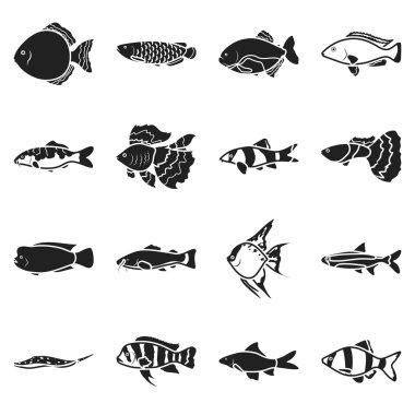 Aquarium fish set icons in black style. Big collection aquarium fish vector symbol stock illustration