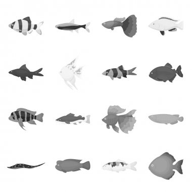 Aquarium fish set icons in monochrome style. Big collection of aquarium fish vector symbol stock illustration