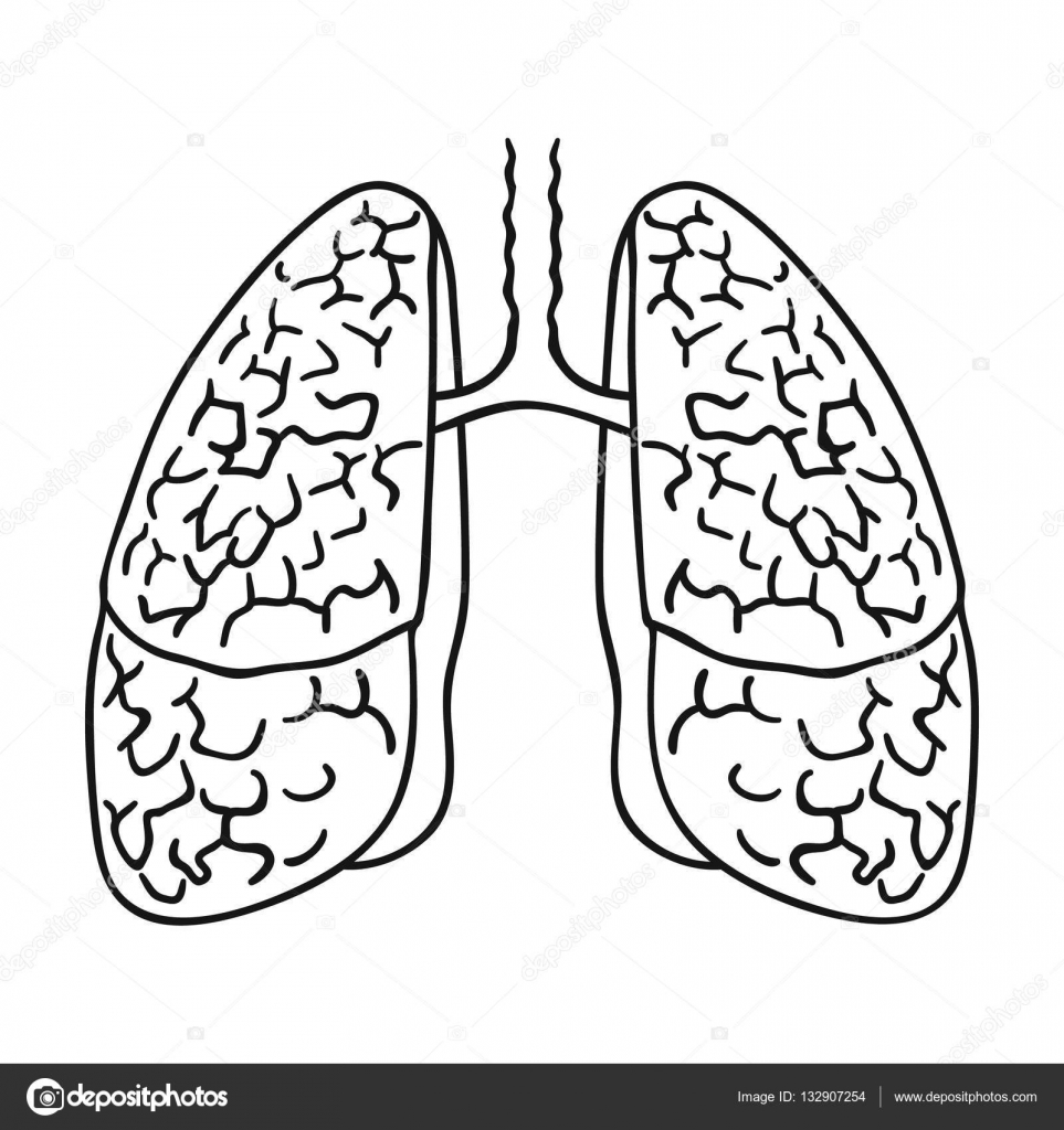 Icono de pulmones humanos en contorno estilo aislado sobre fondo ...