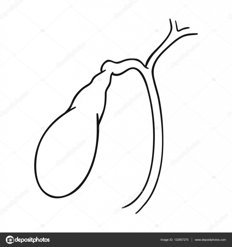 Icono de vesícula biliar humano en esquema estilo aislado sobre ...
