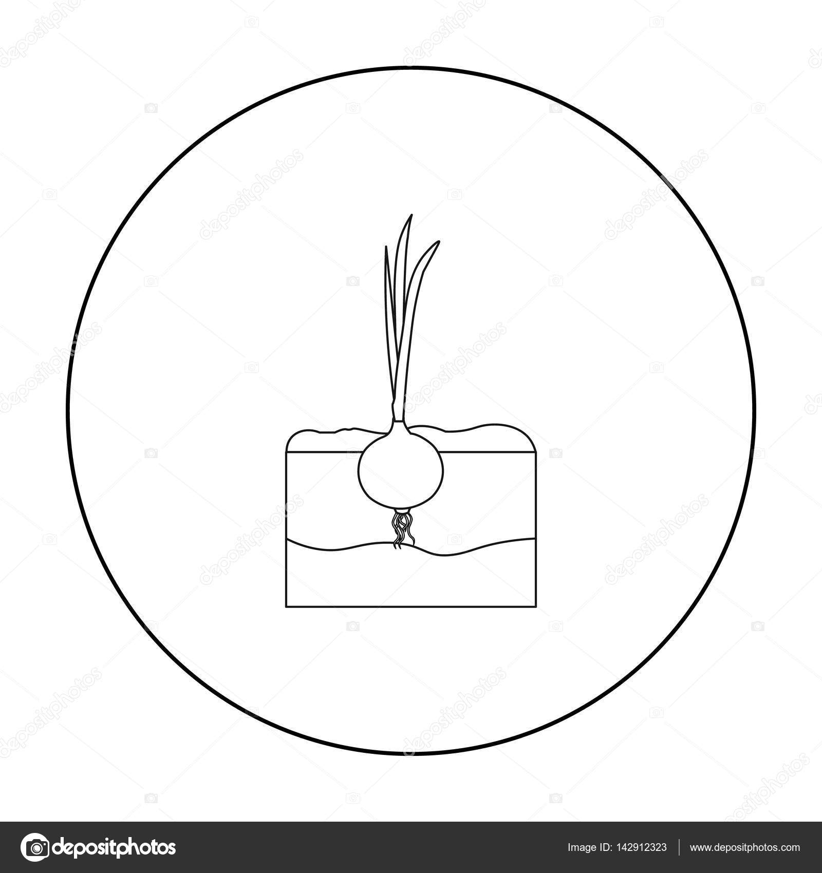 Onion icon outline single plant icon from the big farm garden onion icon outline single plant icon from the big farm garden agriculture outline ccuart Images