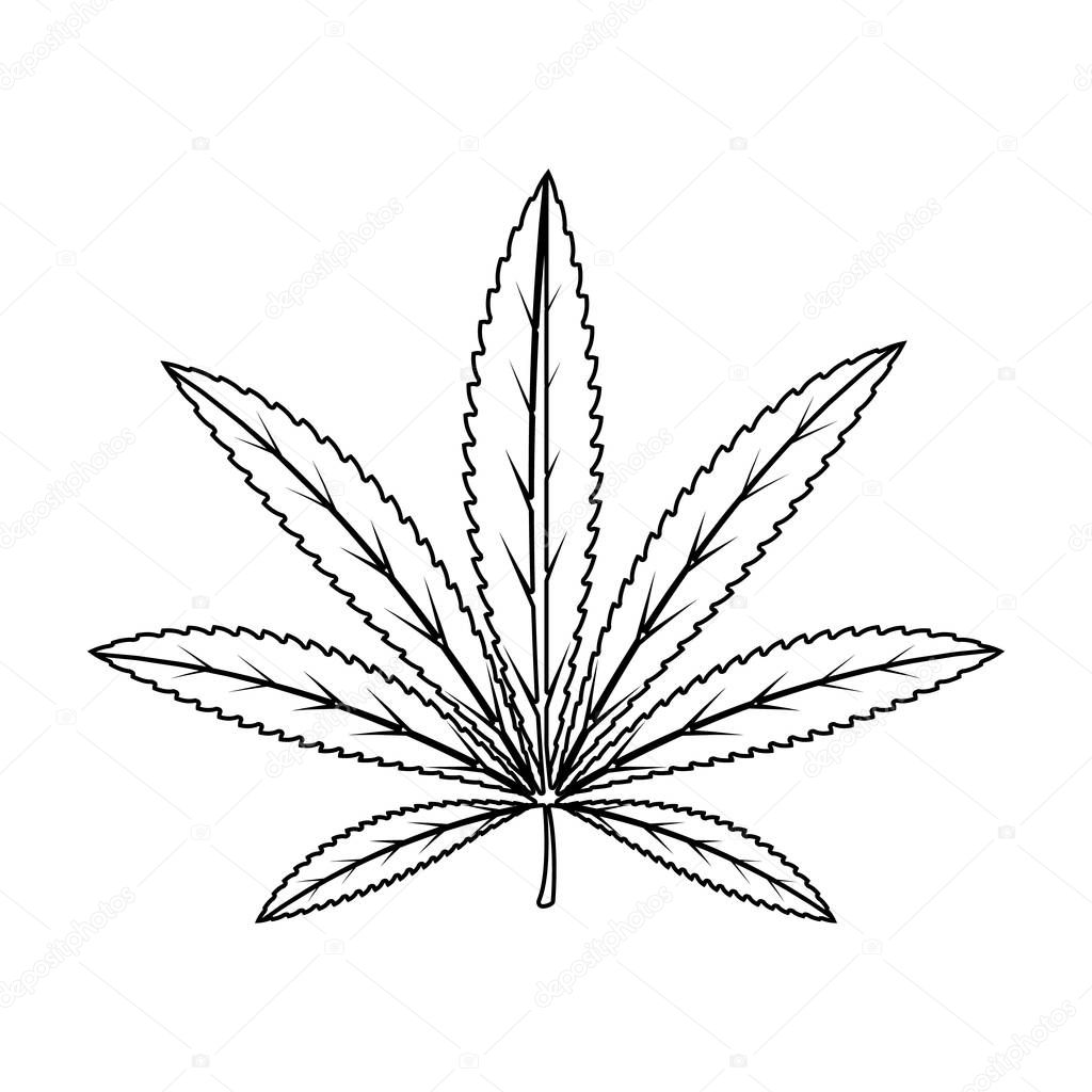 Green leaf of hemp.Hippy single icon in outline style vector symbol stock illustration web.
