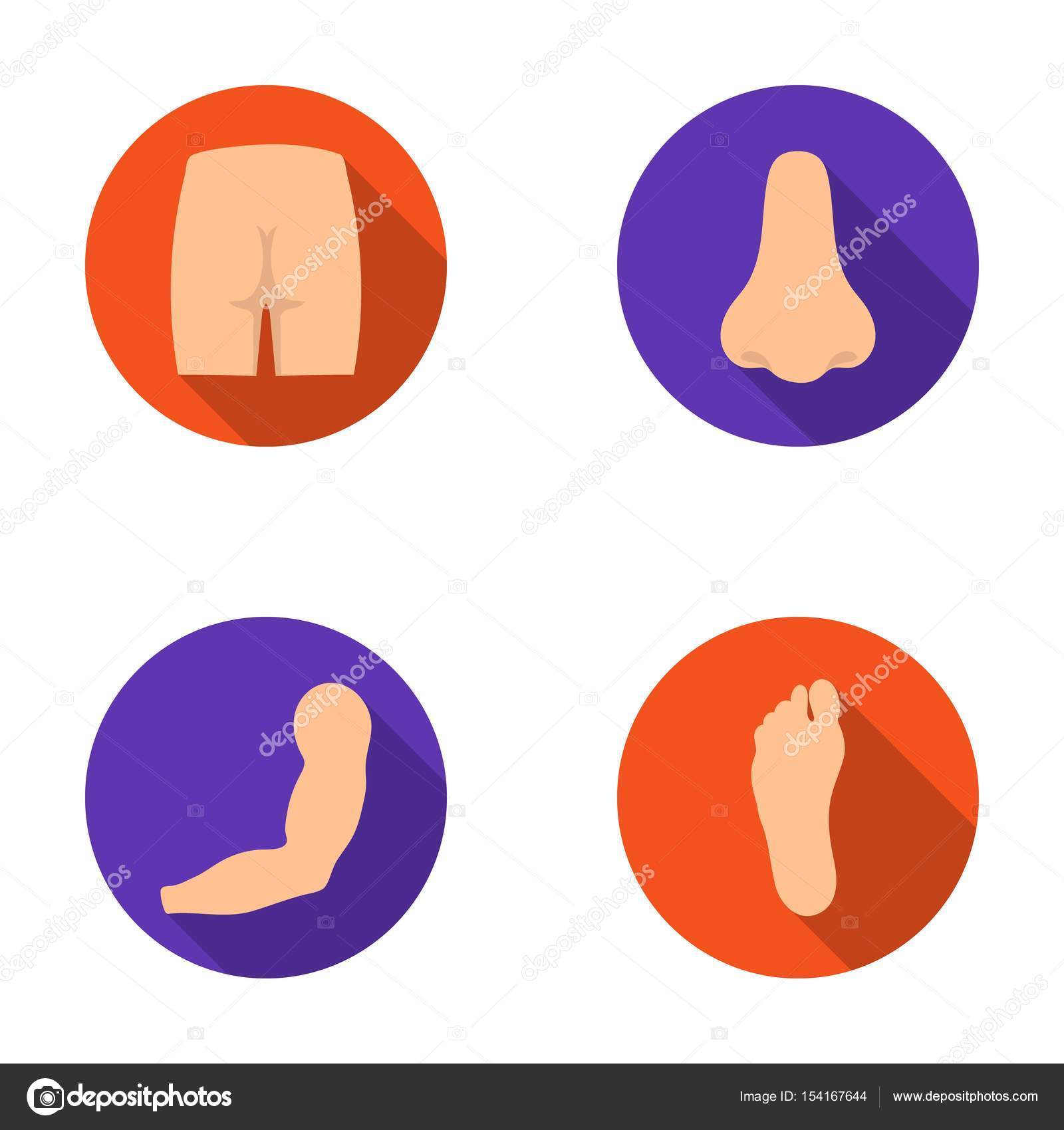 Las nalgas, nariz, brazos, pies. Parte del cuerpo establece los ...
