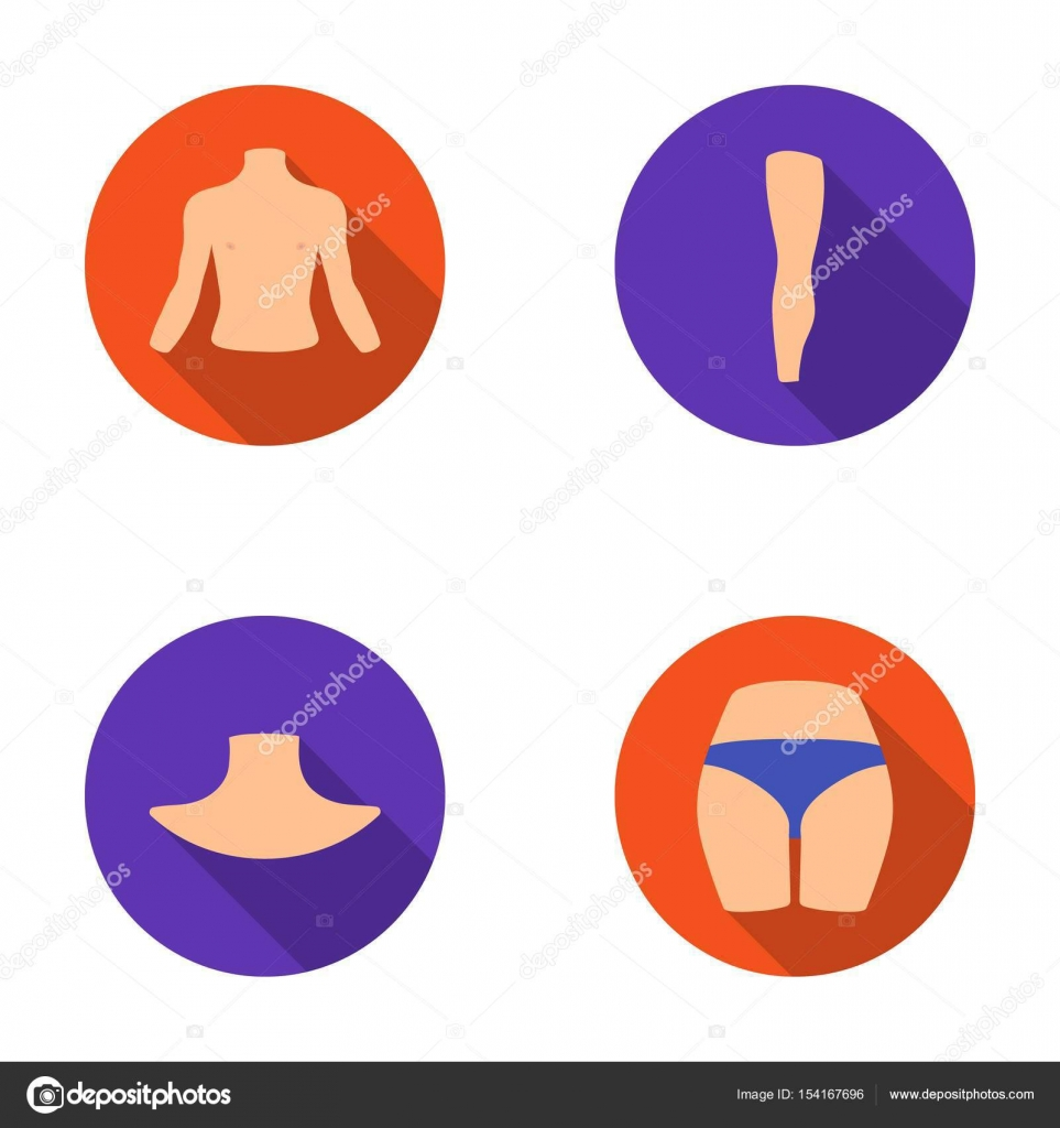 Torso, pierna, cuello y glúteos. Partes del cuerpo establece los ...