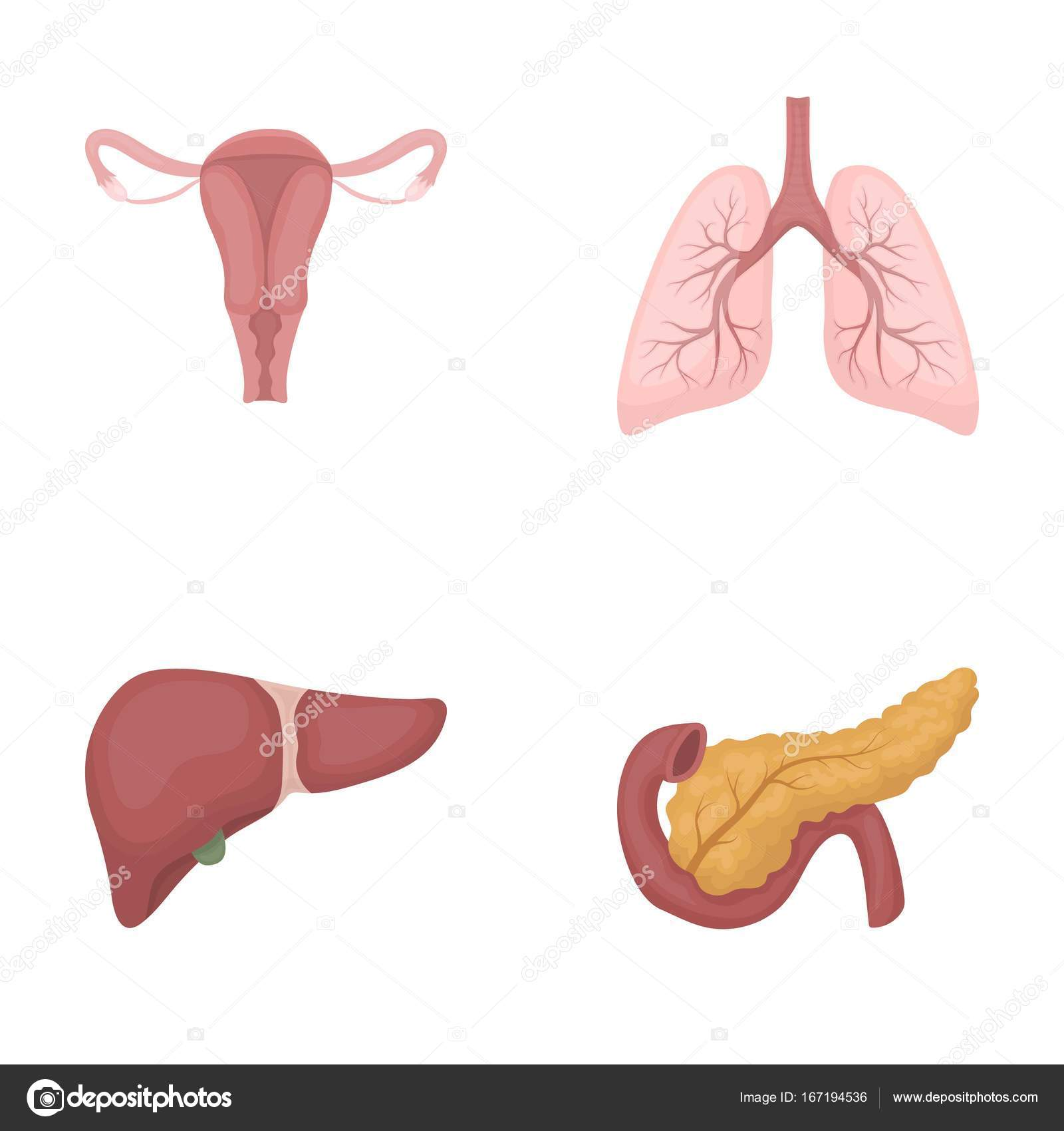 Uterus, lungs, liver, pancreas. Organs set collection icons in ...