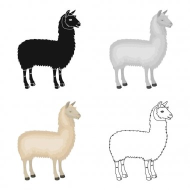 Lama, a South American pack animal. A lame, a cloven-hoofed mammal single icon in cartoon style vector symbol stock illustration web.