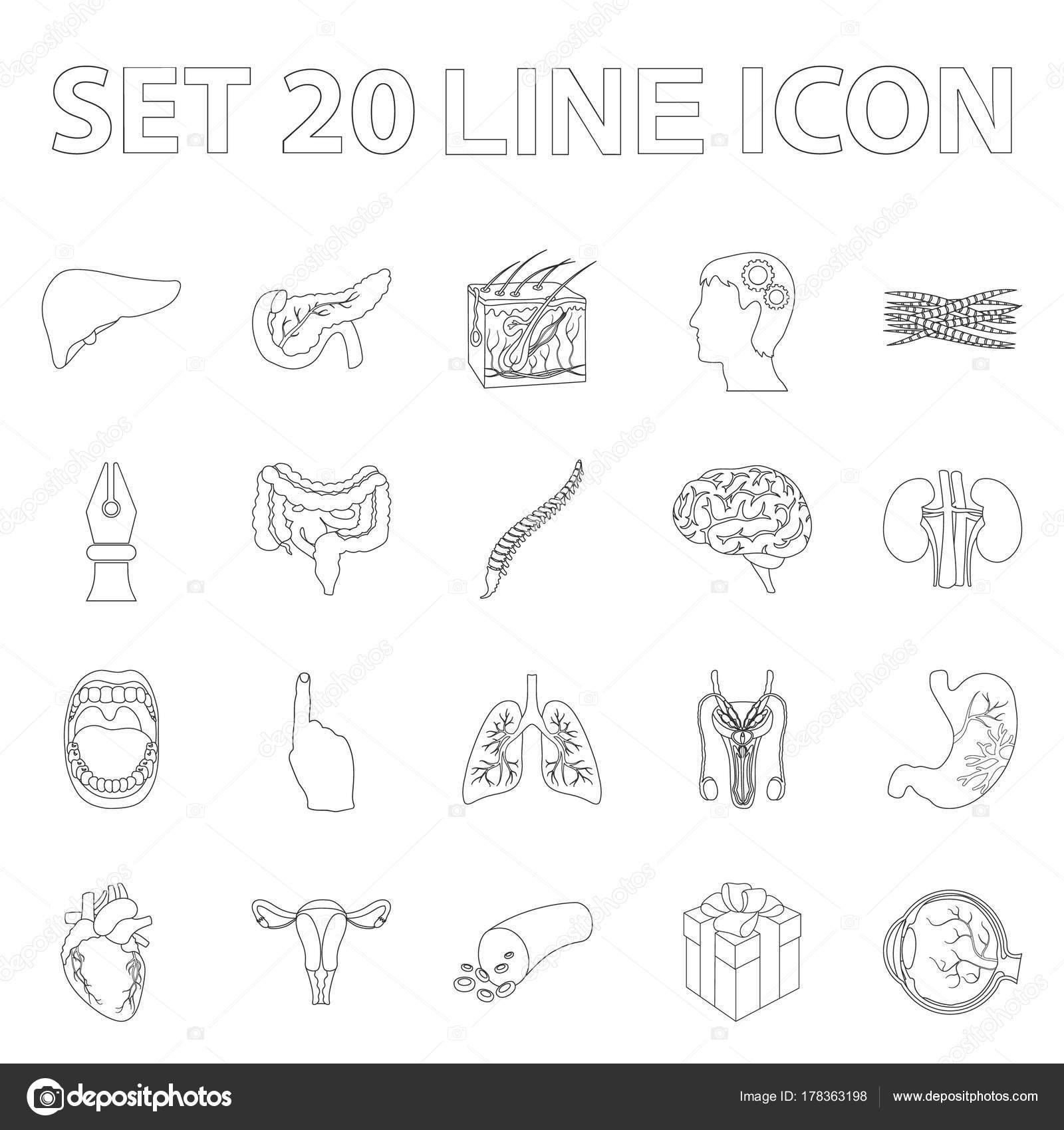 Órganos internos de un iconos de contorno humano de colección set de ...