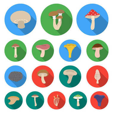 Poisonous and edible mushroom flat icons in set collection for design. Different types of mushrooms vector symbol stock web illustration.