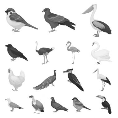 Types of birds monochrome icons in set collection for design. Home and wild bird vector symbol stock web illustration.