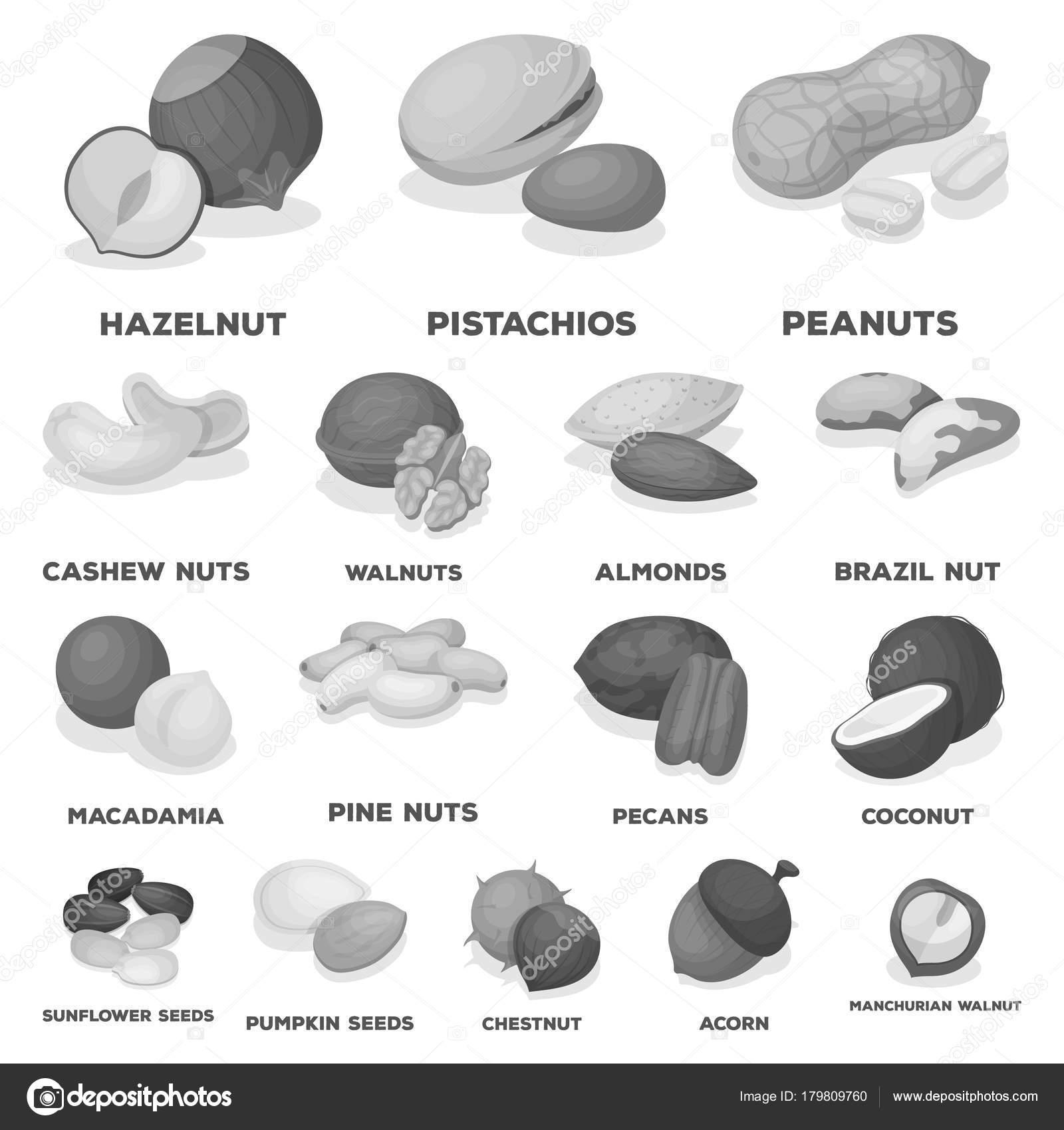 Diferentes tipos de iconos monocromo tuercas de colecci n for Tipos de tuercas