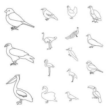 Types of birds outline icons in set collection for design. Home and wild bird vector symbol stock web illustration.