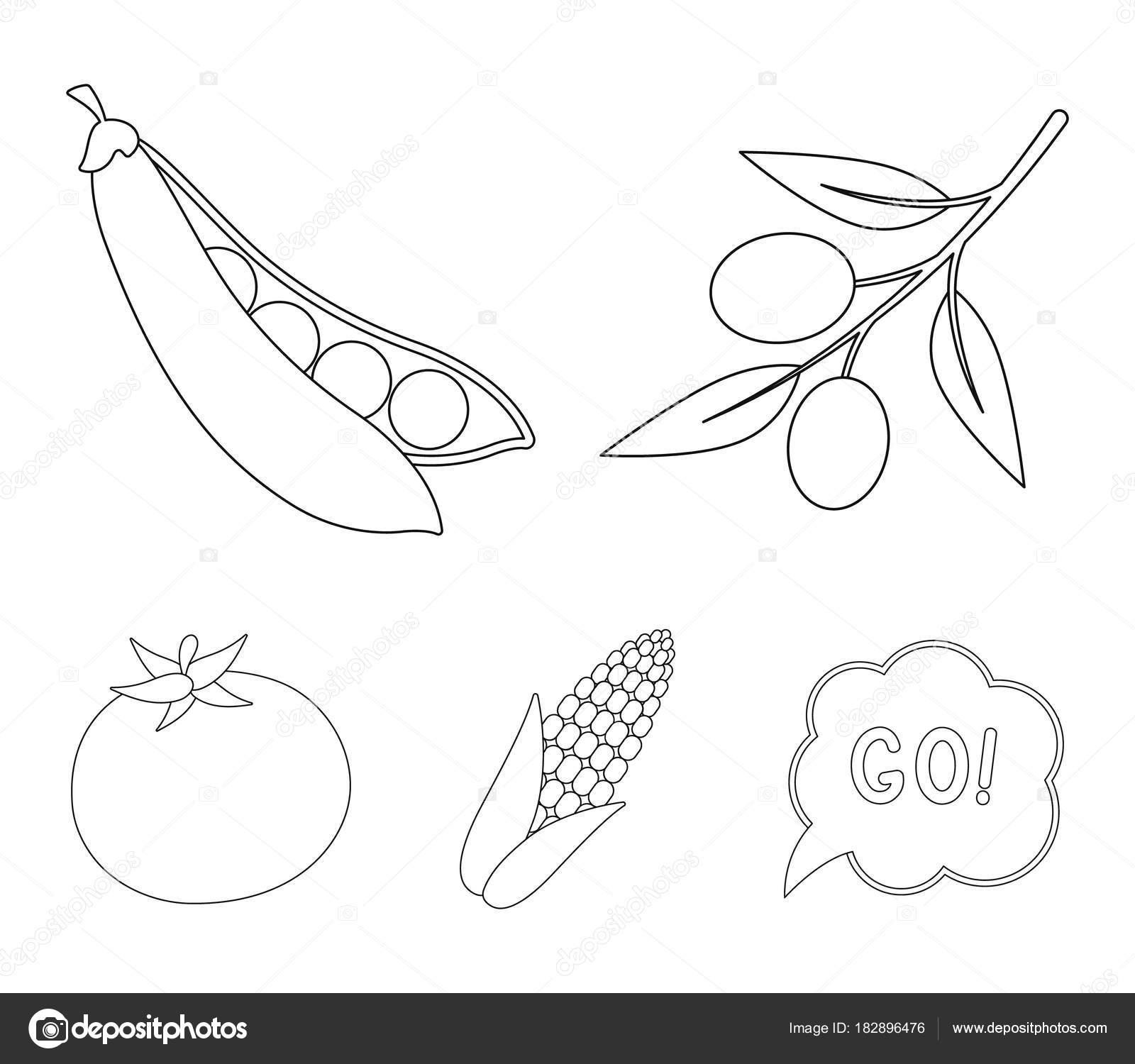 Aceitunas en una rama, mazorca de maíz, guisantes, tomate rojo ...