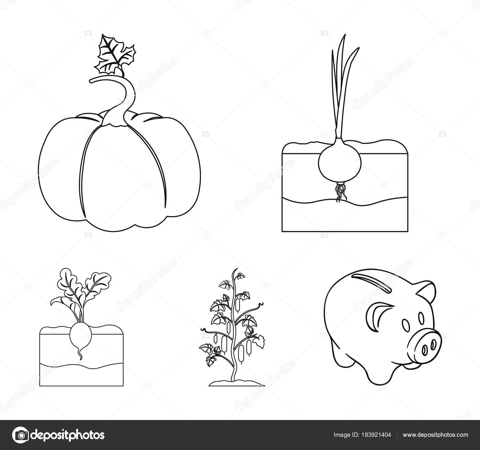 Onion pumpkin and other vegetablesant set collection icons in onion pumpkin and other vegetablesant set collection icons in outline style vector symbol ccuart Images