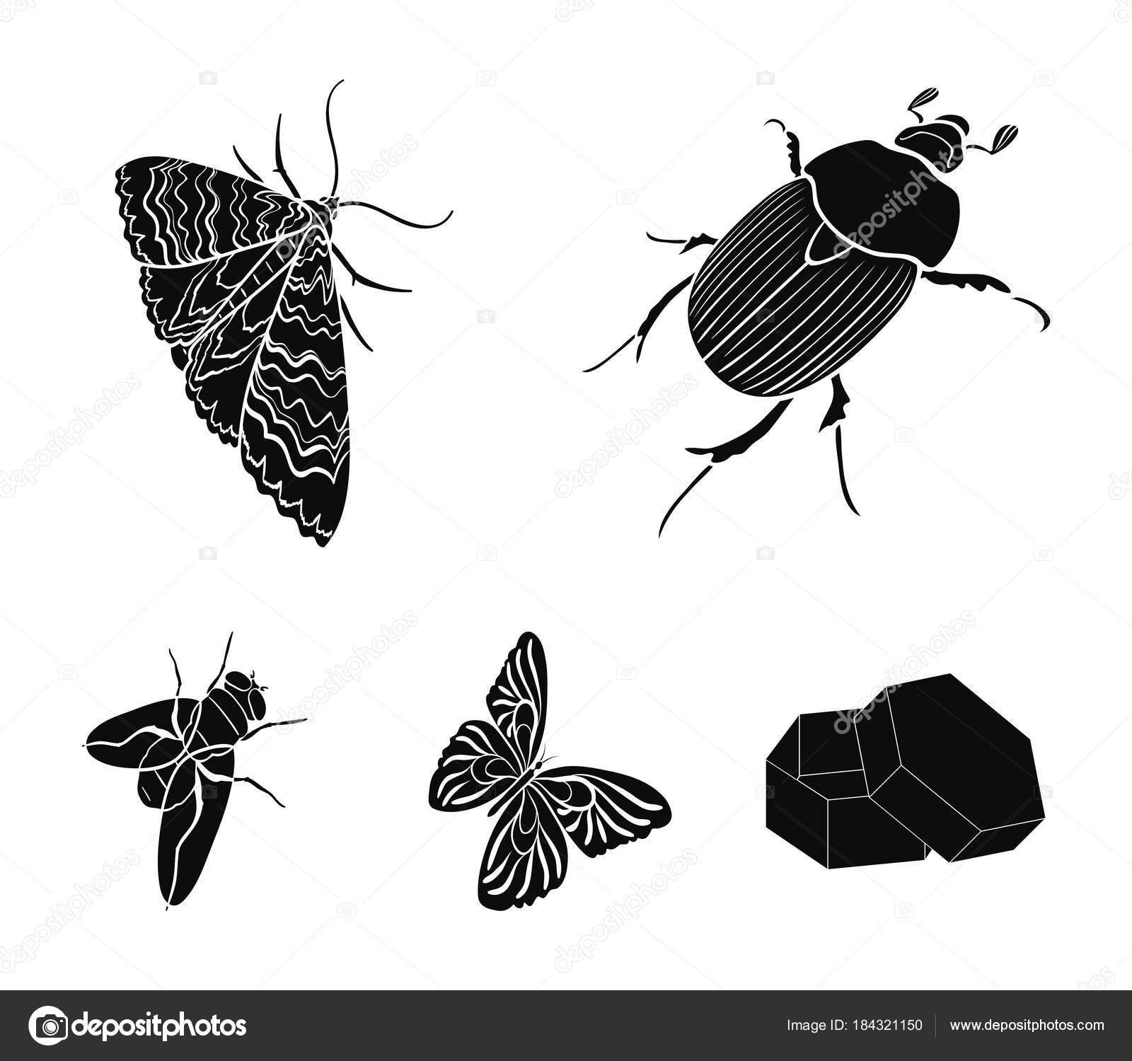 Fotos Artropodos Para Imprimir Escarabajo Insectos Artrópodos