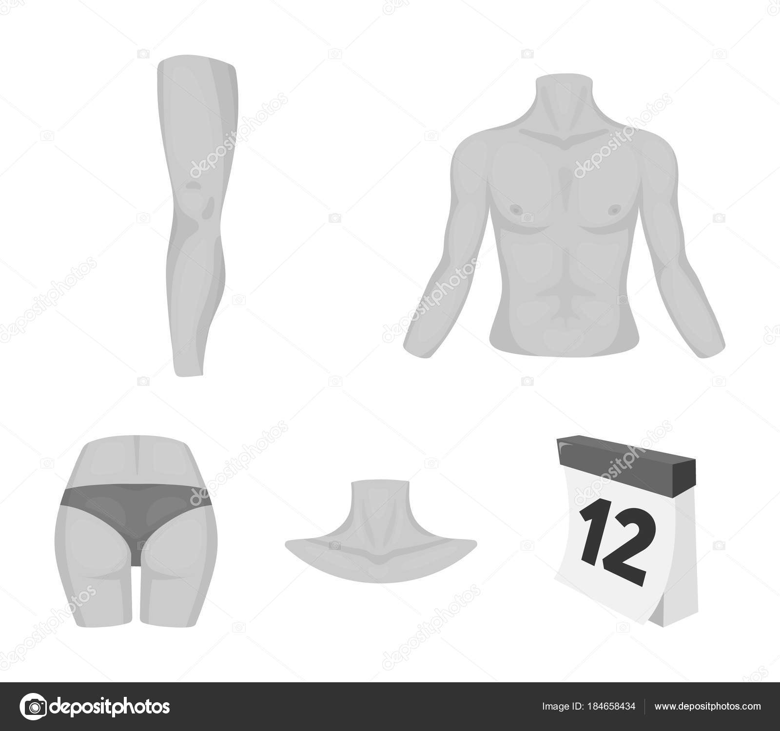 Torso Leg Neck And Buttocks Body Parts Set Collection Icons In