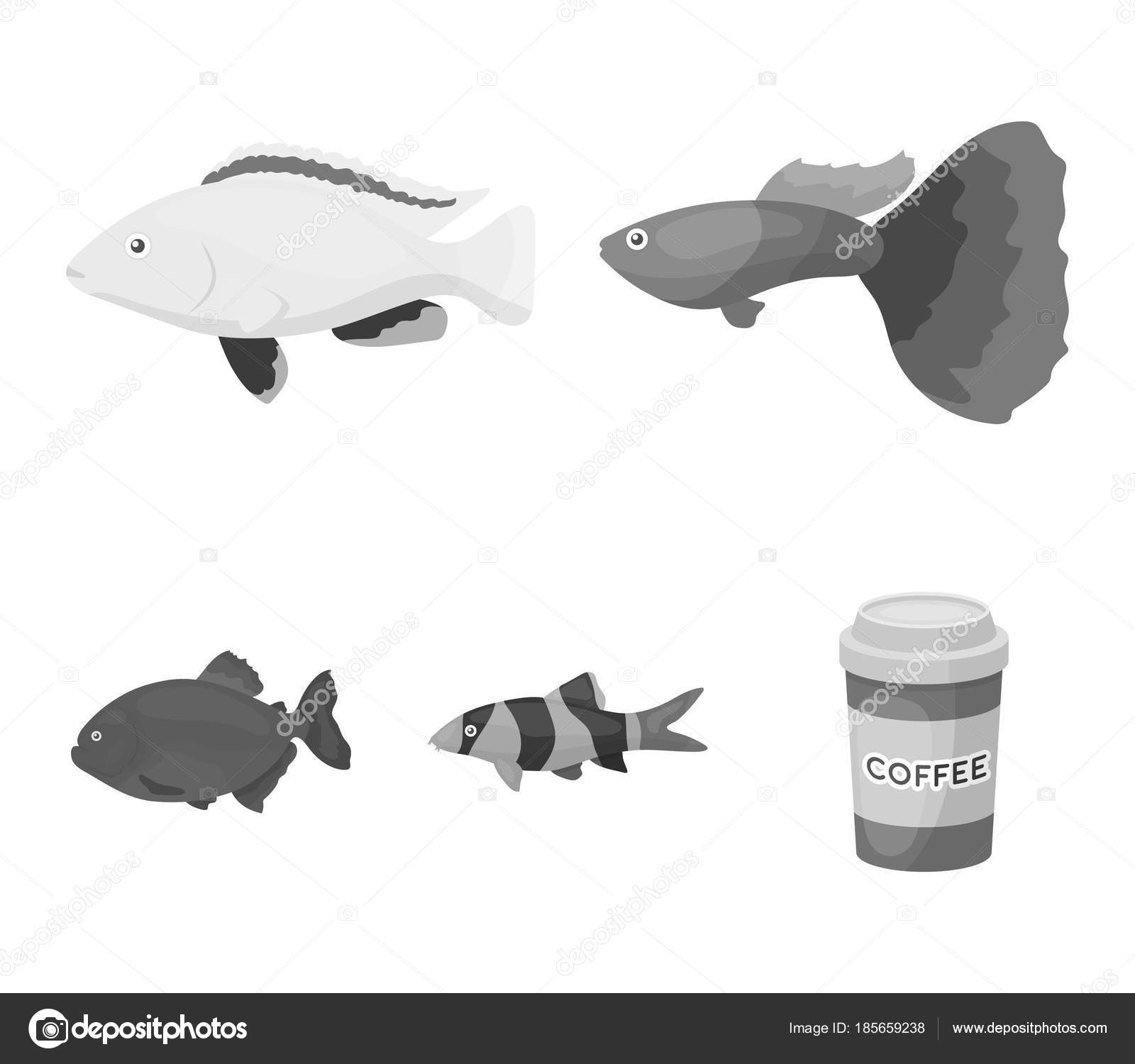 Botia clown piranha cichlid hummingbird guppyfish set botia clown piranha cichlid hummingbird guppyfish set collection icons in monochrome style vector symbol stock illustration vector by pandavector biocorpaavc Images