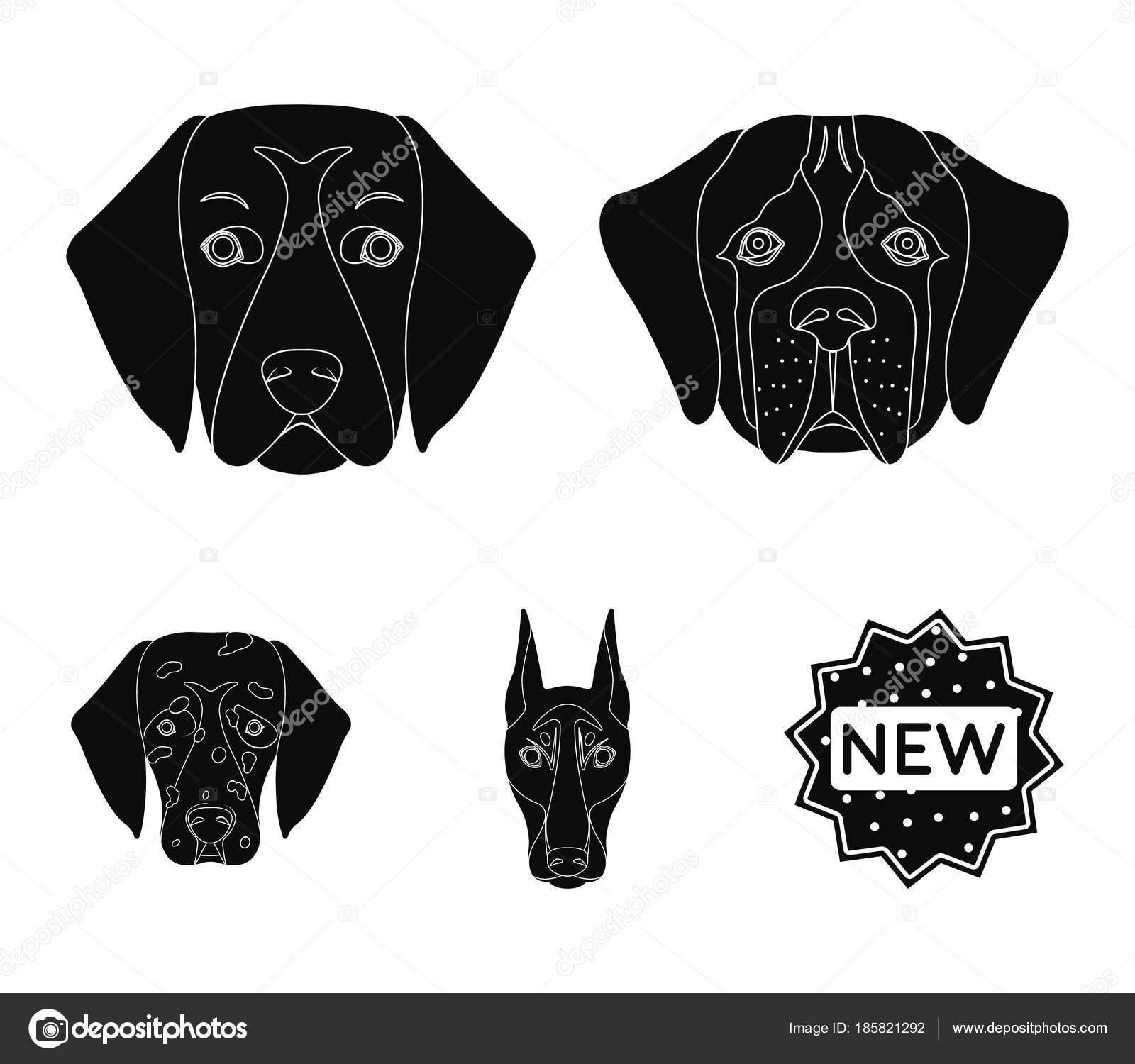 Fang von verschiedenen Rassen der Hunde. Hund der Rasse Bernhardiner ...
