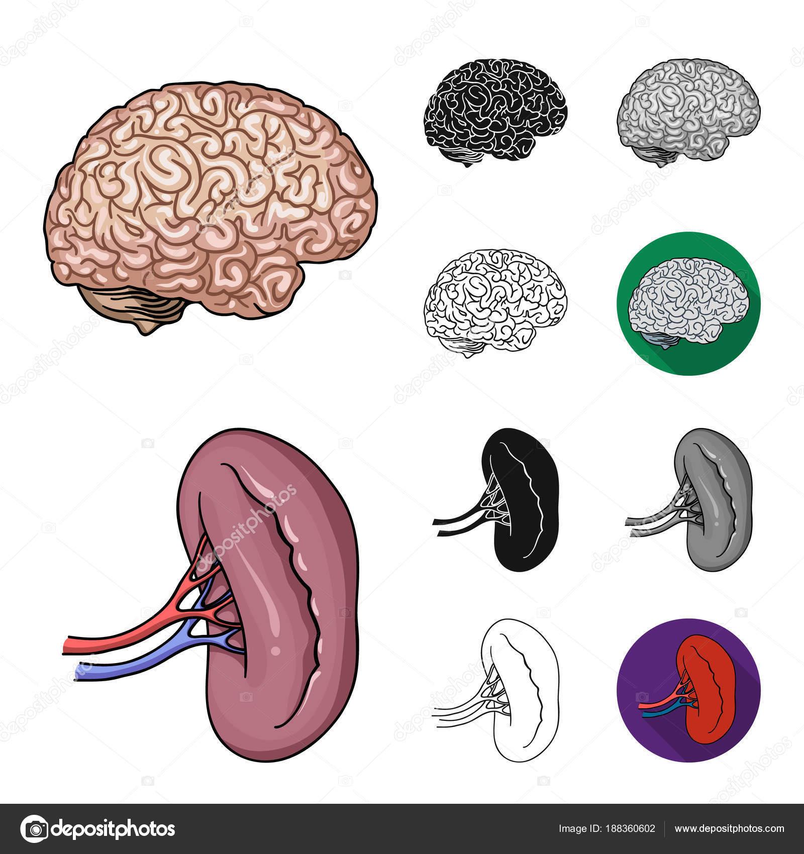 Menselijke organen tekenfilm, zwart, plat, zwart-wit en pictogrammen ...