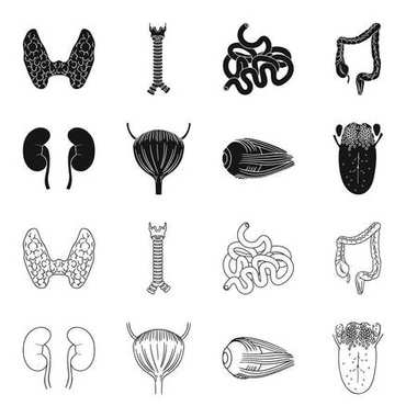 Kidney, bladder, eyeball, tongue. Human organs set collection icons in black,outline style vector symbol stock illustration web.