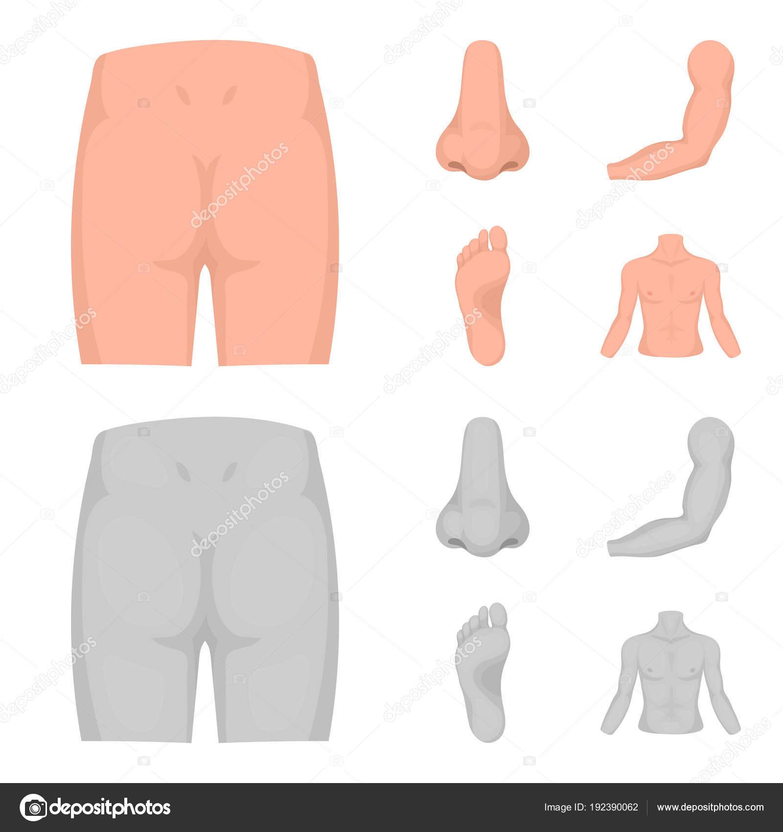 Las nalgas, nariz, brazos, pies. Parte del cuerpo sistema los iconos ...