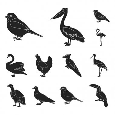 Types of birds black icons in set collection for design. Home and wild bird vector symbol stock web illustration.