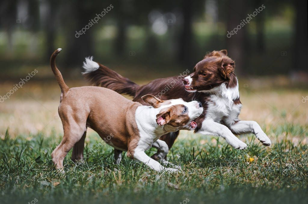 Two beautiful puppy playing in the park on nature.