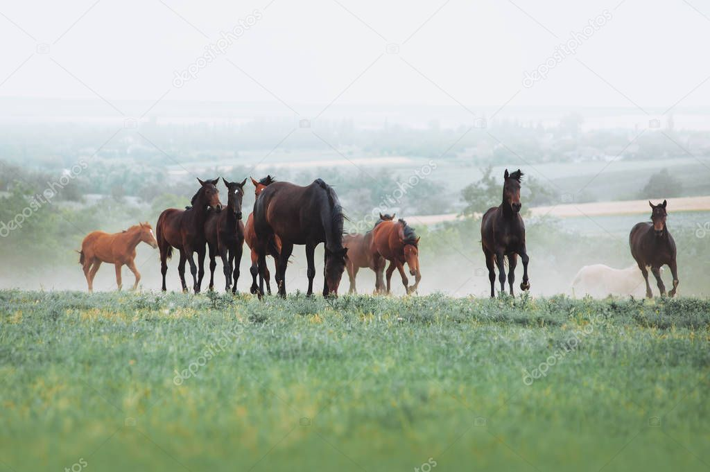 The herd of horses graze in the field against the background of the landscape and the morning haze.