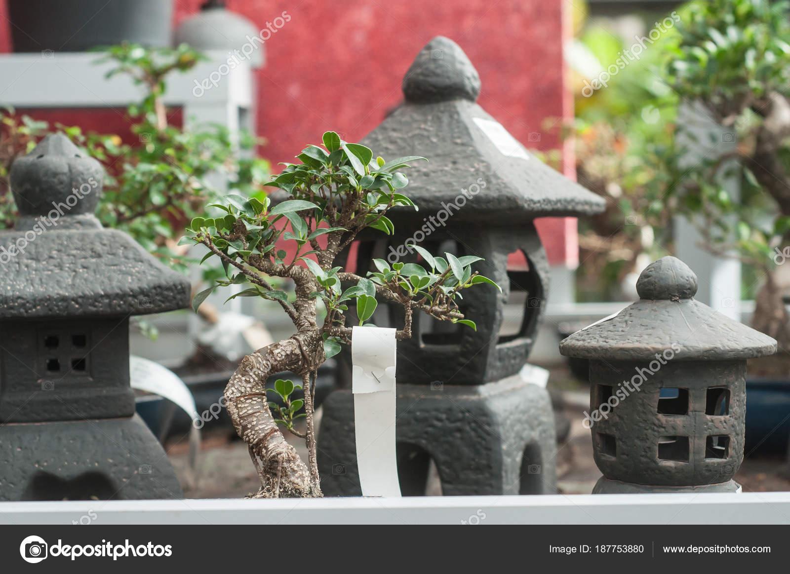 Ficus Bonsai und asiatische Dekoration im Garten laden — Stockfoto ...