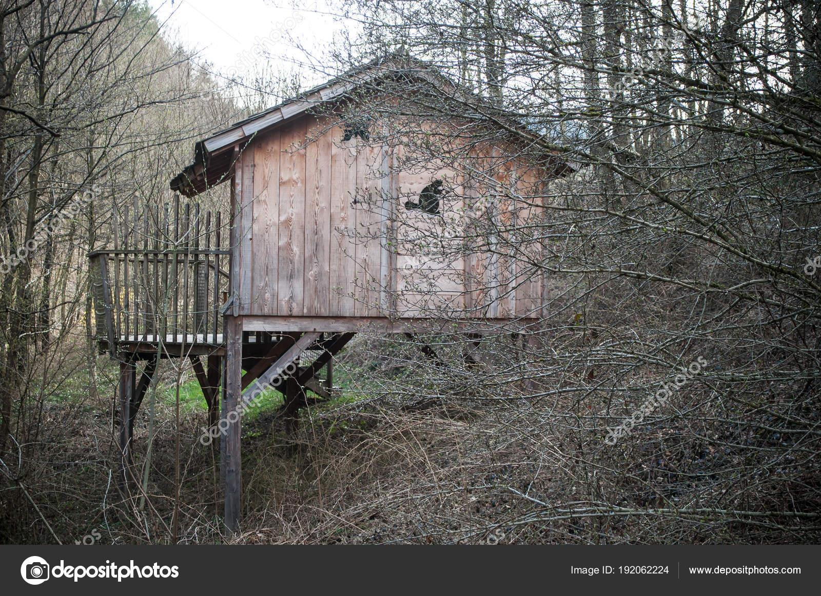 Cabana De Madera Tradicional De Los Arboles En El Bosque Fotos De - Cabaas-de-madera-en-arboles