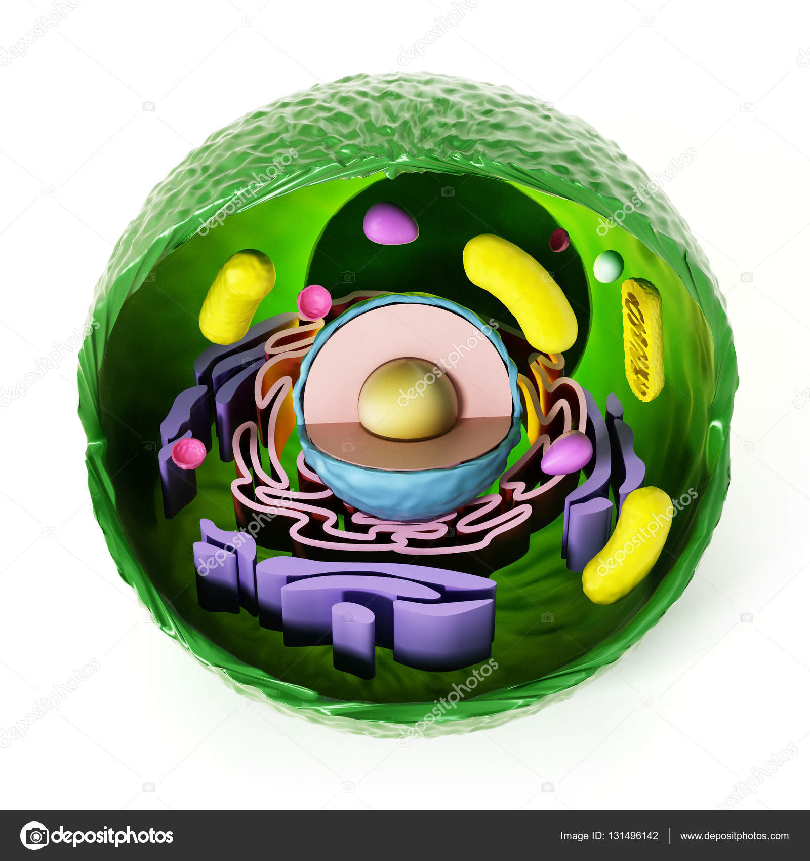 Animal cell anatomy isolated on white background. 3D illustration ...