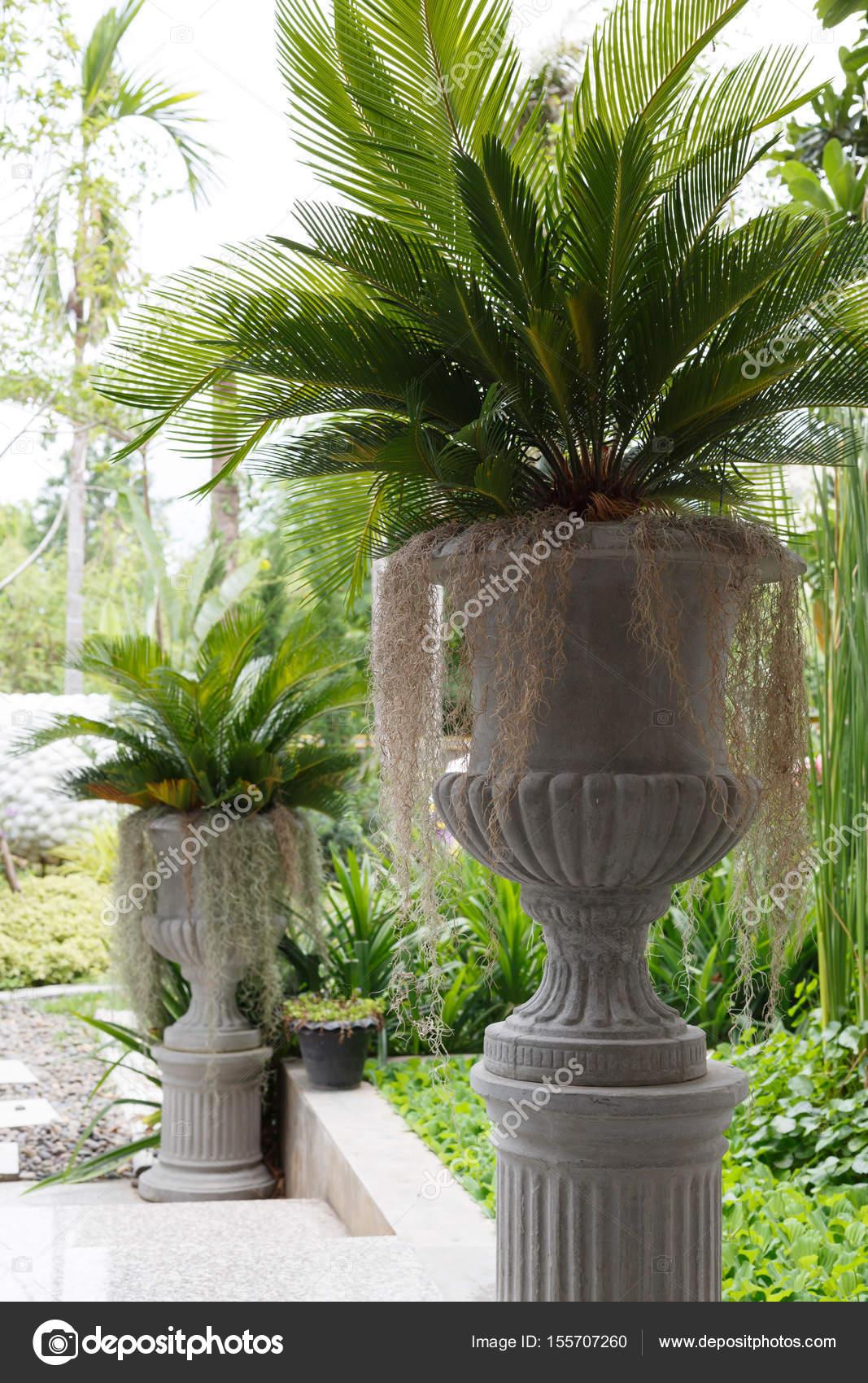 arbre en pot à plantes de jardin vert — Photographie Sutichak ...