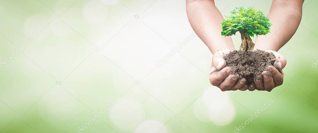 Earth day concept: Human hands holding tree over blurred nature background