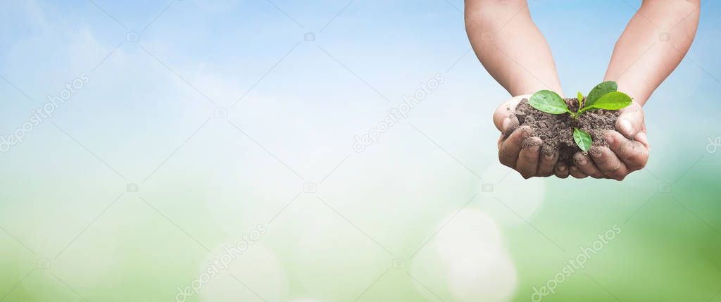 World soil day concept: Human hands holding small tree over blurred nature background