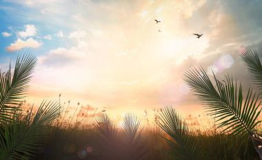 Palm Sunday concept: Palm leaves on meadow autumn sunset background