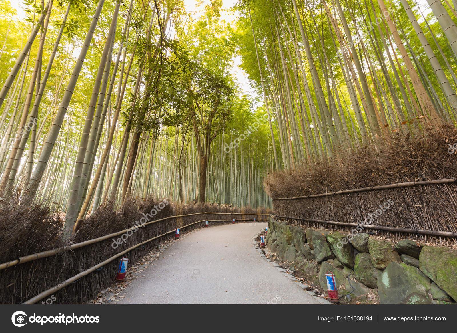 Jardin De Bambu Kyoto Sendero Sobre Jardin De Bambu Kyoto Japon - Jardin-bambu