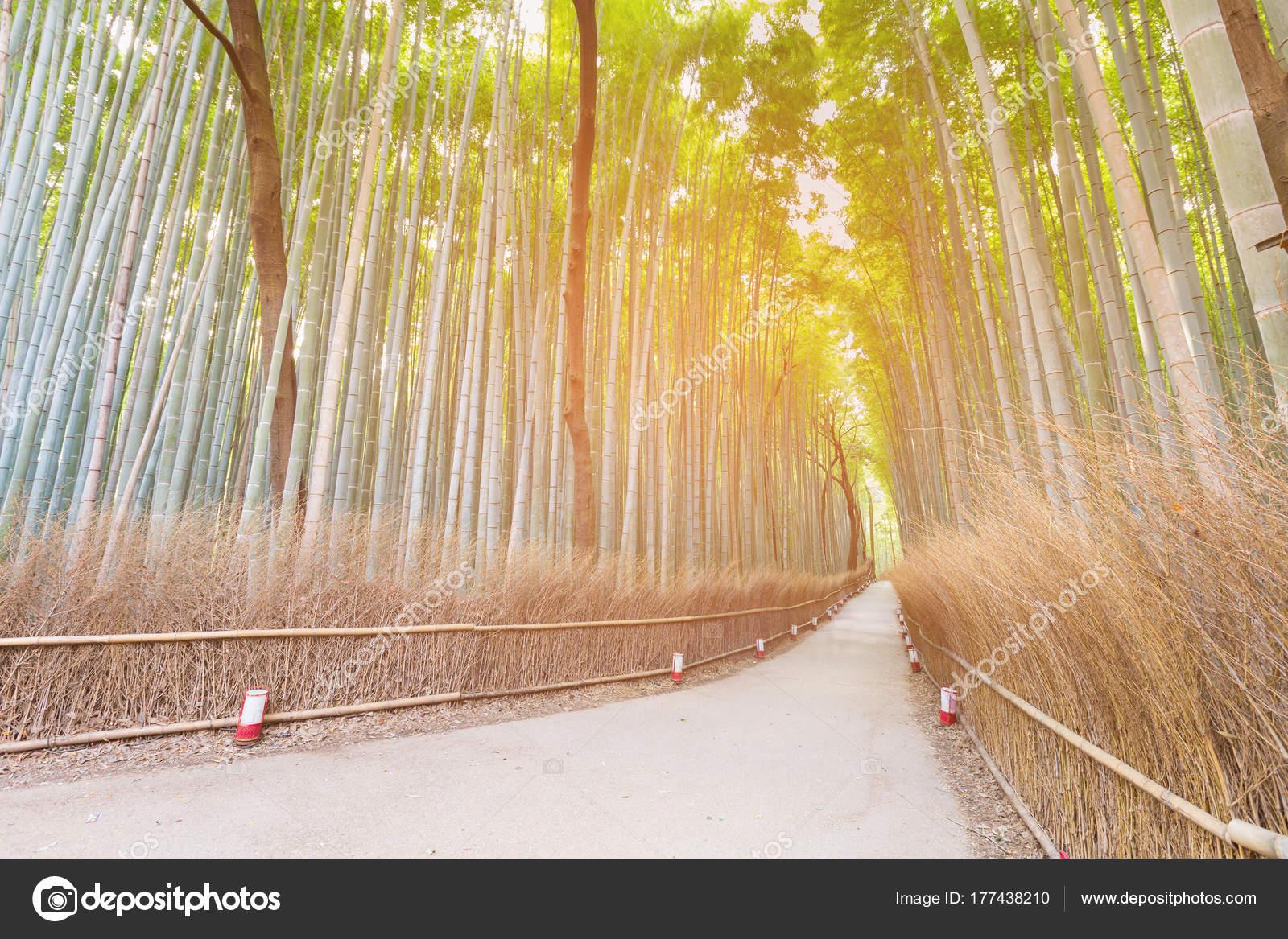 Bambuswald Arashiyama Mit Walking Weg Mit Sonnenlicht Effekt
