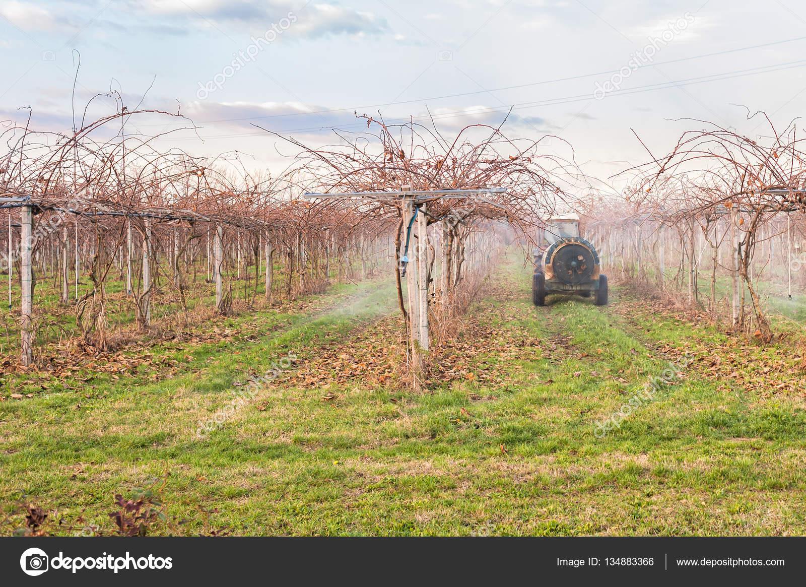 Lavoro di agricoltura antiparassitario di trattamento ad for Albero di kiwi