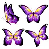 Bright colorful pink butterflies isolated on white background