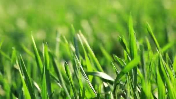 Video zelené trávy krajiny