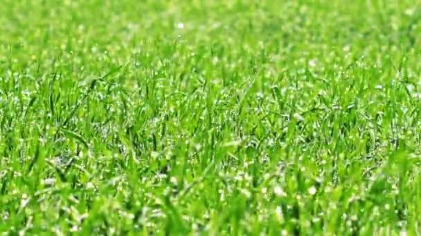 Video of Green Grass Landscape