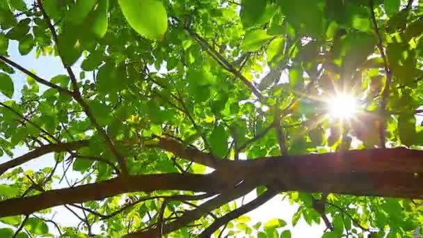 Sluneční svit skrz listí Krajina