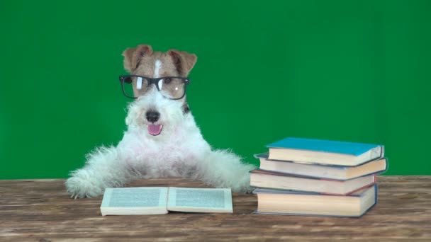 School Dog with Books Green Screen