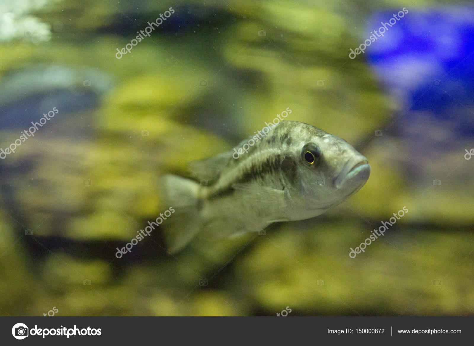 Beautiful colorful fish in the aquarium — Stock Photo © frizzyfoto ...